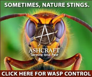 AshcraftTermiteWasp300x250